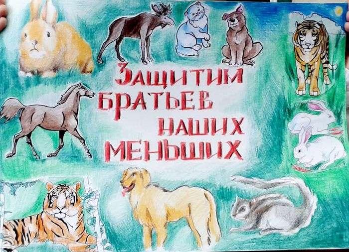 выборе размеров, плакат о животных что