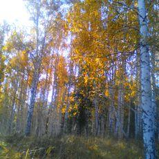 Работа участника - Брежнева Наталья
